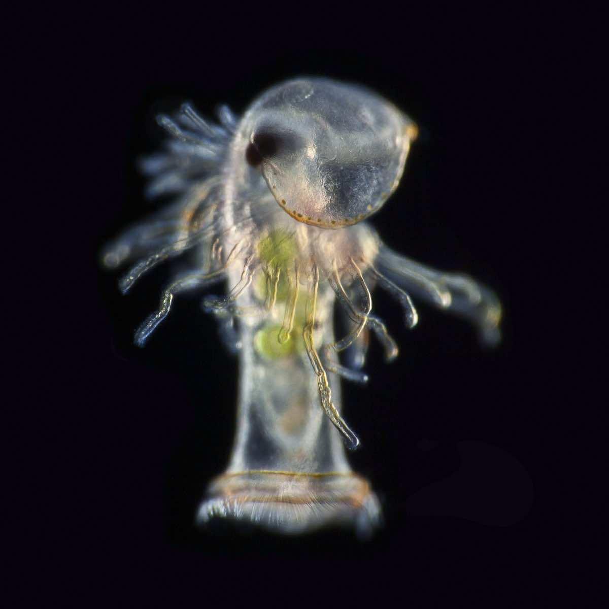 microscopic photography41