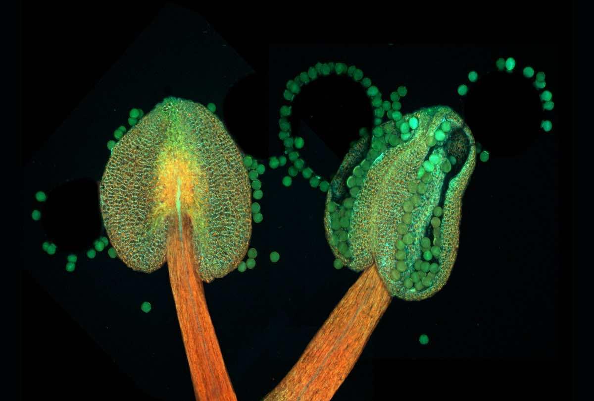 microscopic photography560