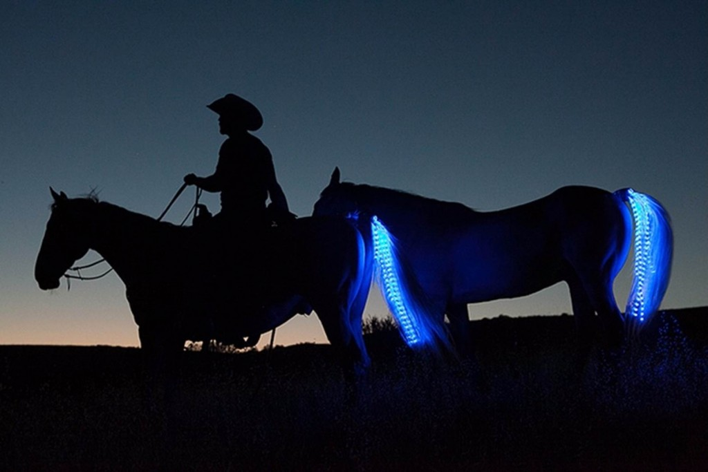 Tail Lights Rider Safety Program – Horse Safety