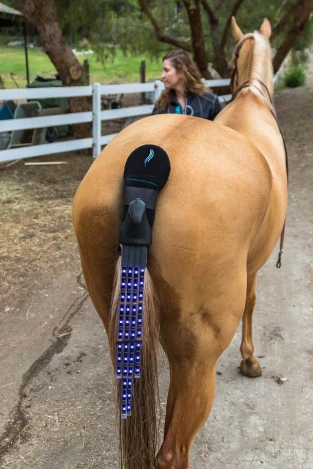 Tail Lights Rider Safety Program – Horse Safety 6