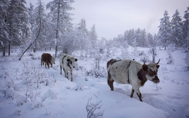 oymyakon the coldest city in the world18