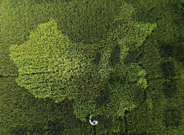 30 Amazing Aerial Photos From 2015 23