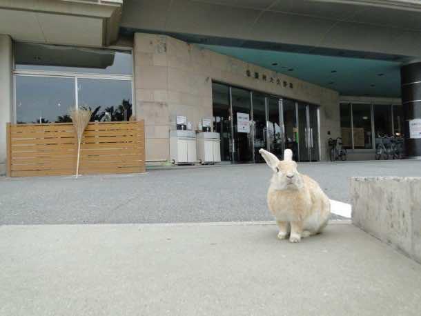 Okunoshima Us agi Jima12