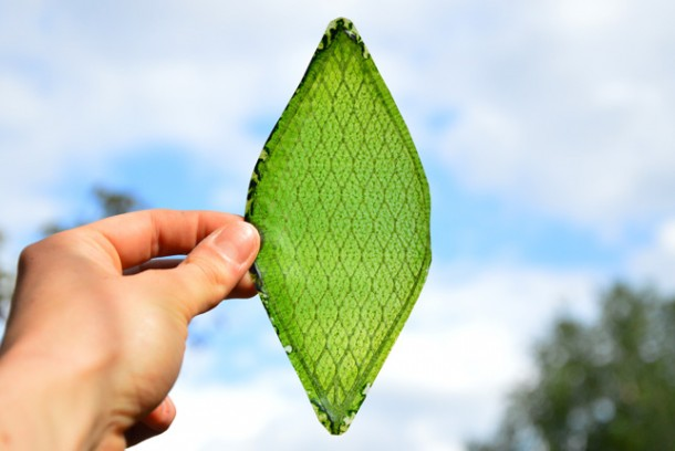 artificial leaf2