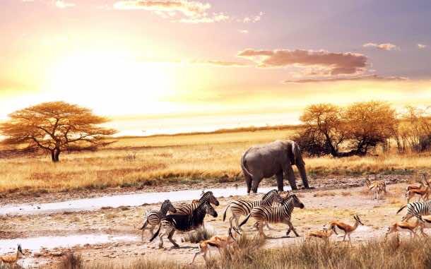 Africa Wallpaper 1