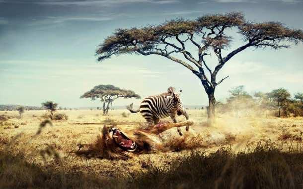 Africa Wallpaper 10