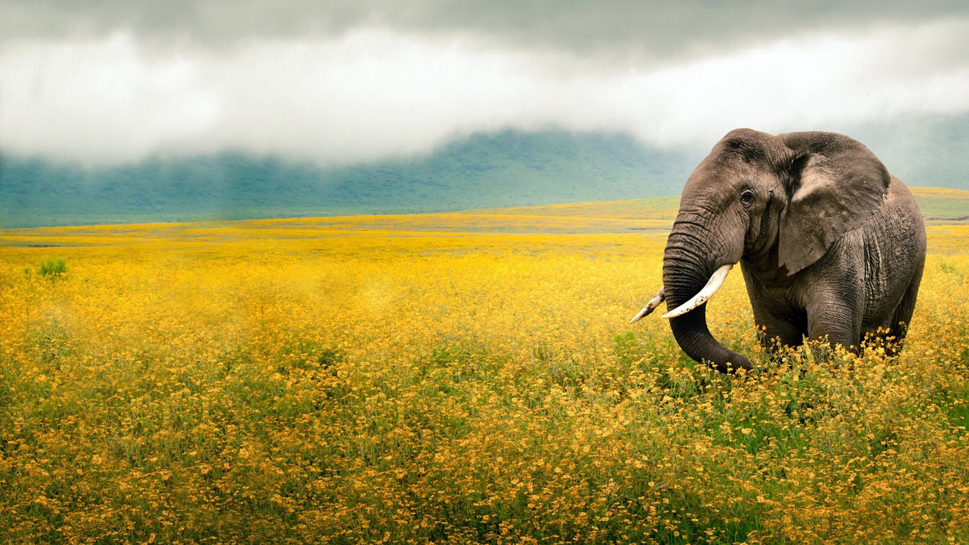 48 hd africa wallpapers for desktop and mobile