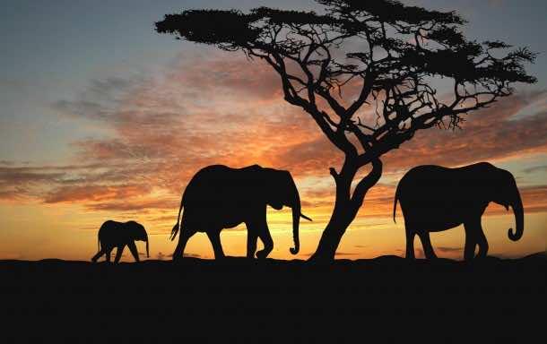 Africa Wallpaper 18