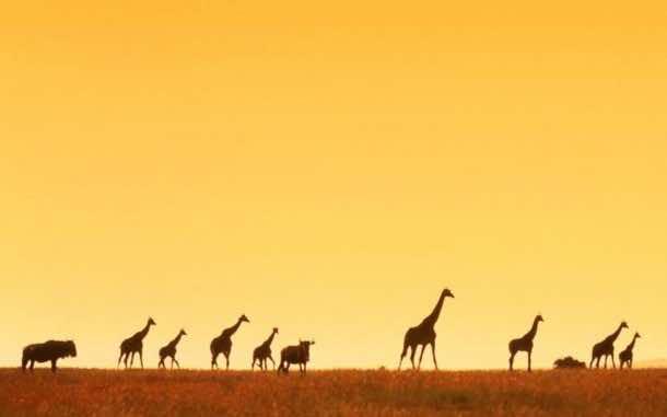 Africa Wallpaper 2