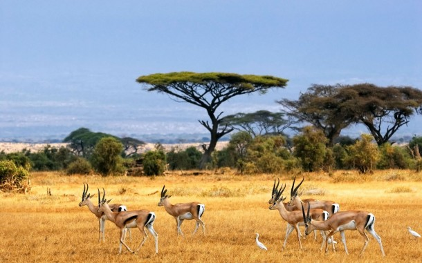Africa Wallpaper 21