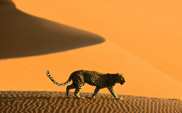Africa Wallpaper 22