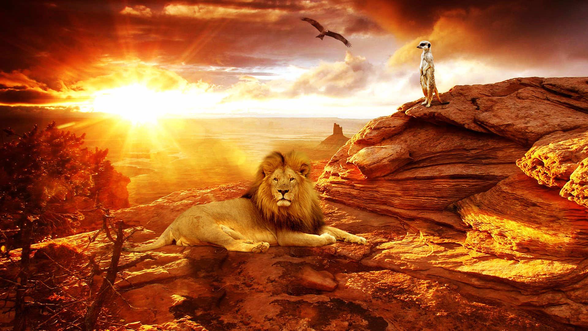 48 HD Africa Wallpaper...
