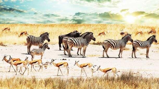 Africa Wallpaper 25