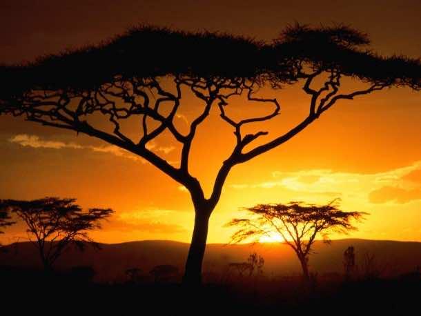 Africa Wallpaper 3