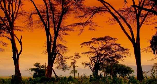 Africa Wallpaper 41