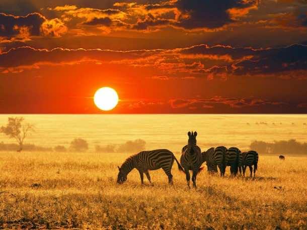 Africa Wallpaper 7