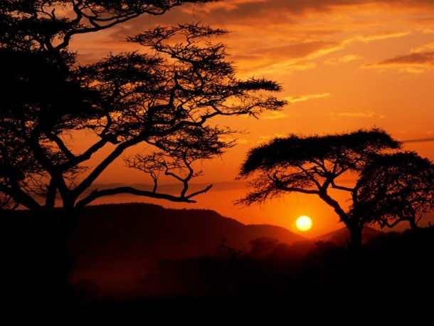 Africa Wallpaper 8