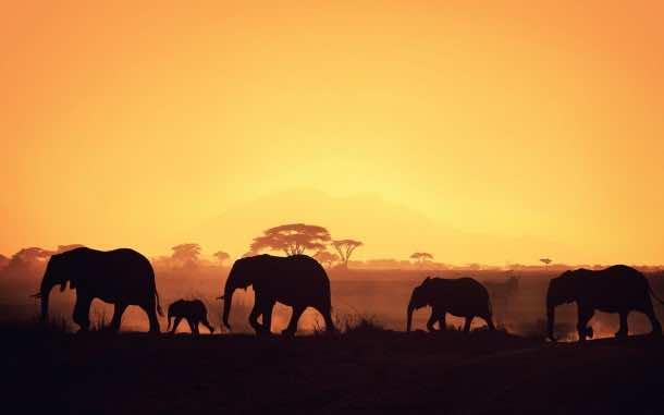 Africa Wallpaper 9