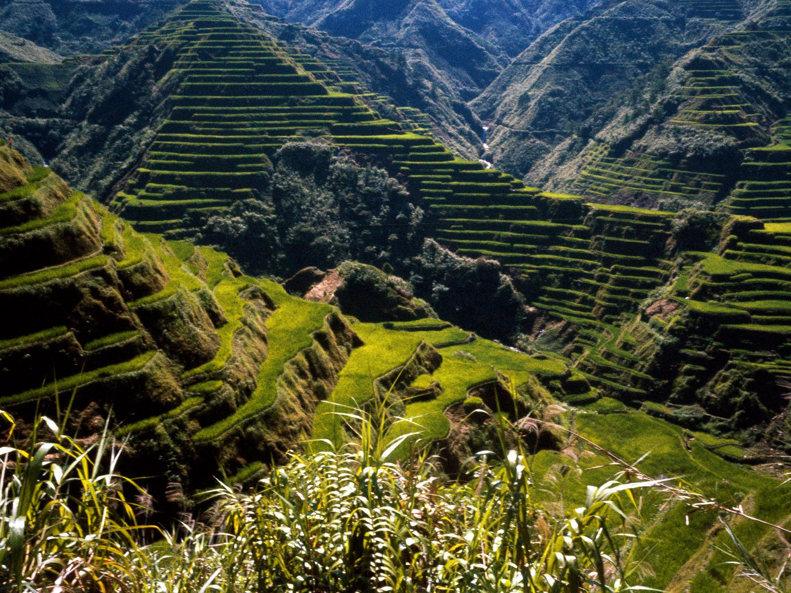 Philippines wallpapers download hd wallpaper here for Terrace farming meaning