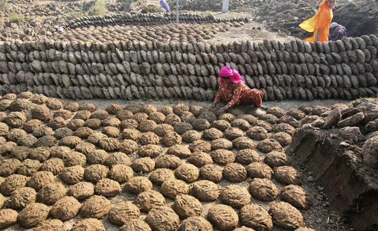 cow dung patties sales in India2