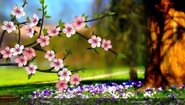 flower wallpaper 4
