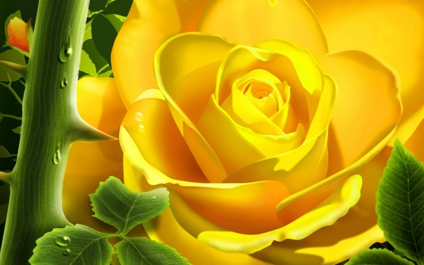 flower wallpaper 40
