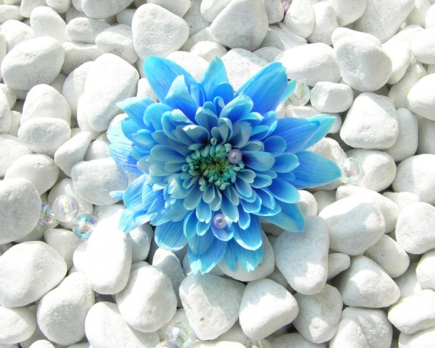 flower wallpaper 47