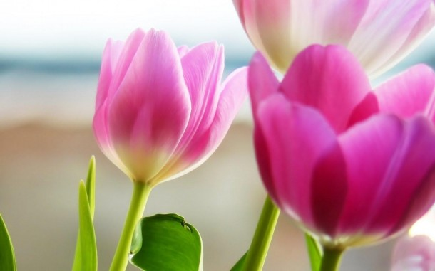 flower wallpaper 49