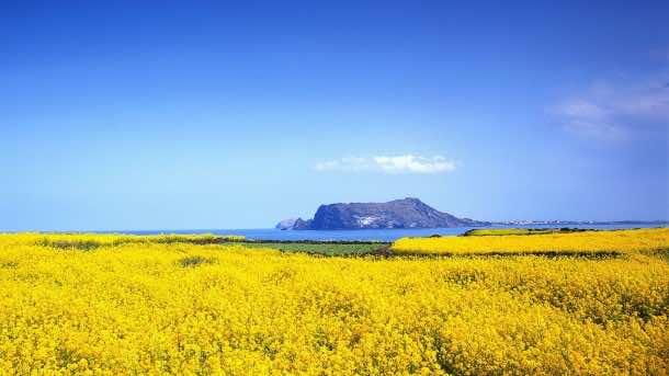 ??? ? (Spring on Jeju Island)