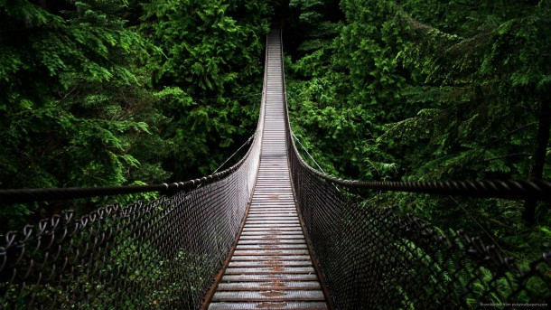 hanging bridge wallpaper