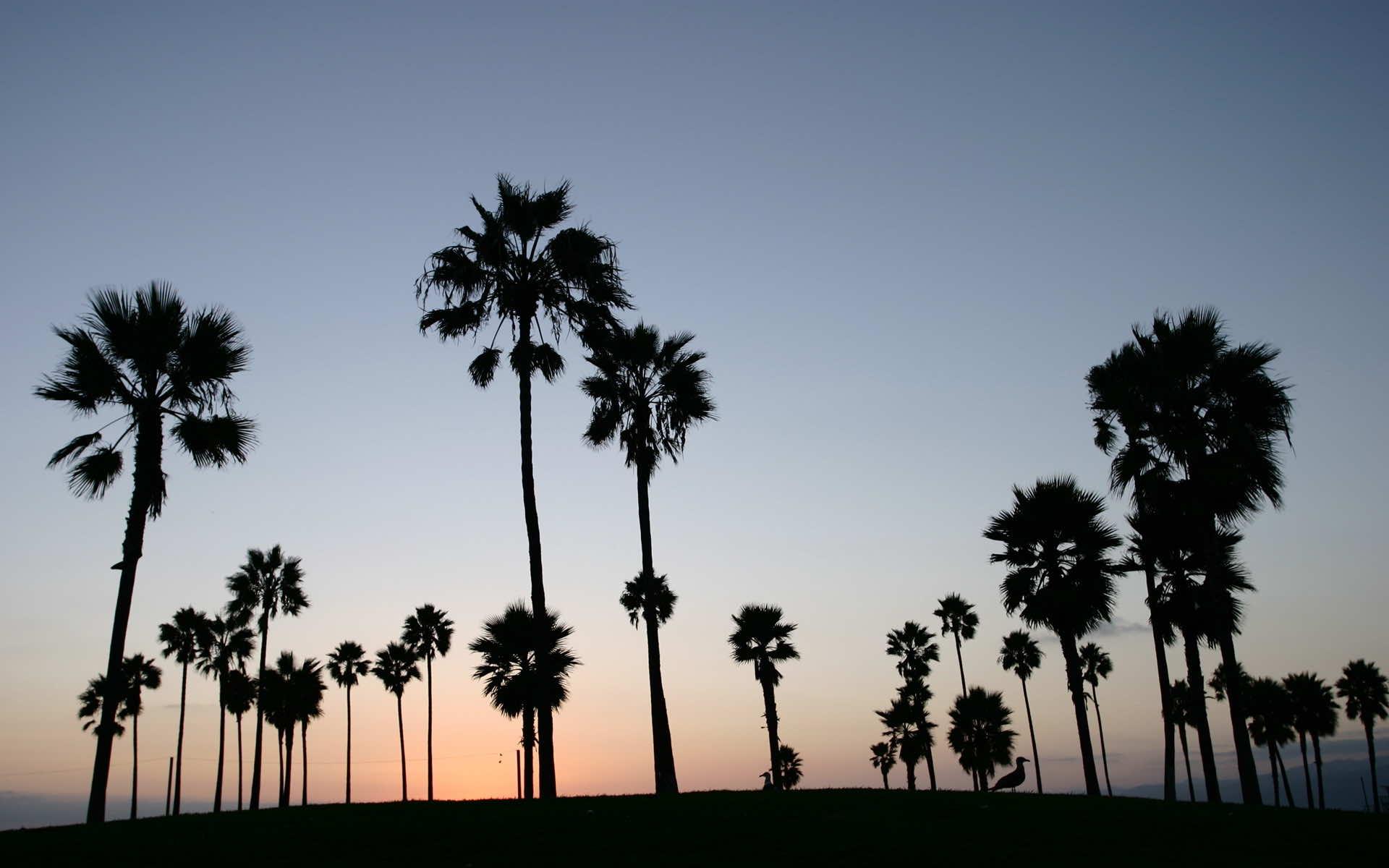 Best Restaurants At Los Angeles