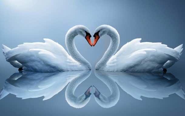 love wallpaper 12