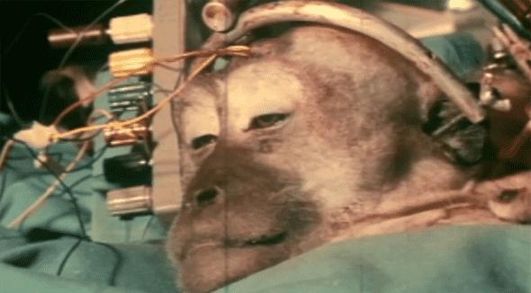 monkey head transplant2