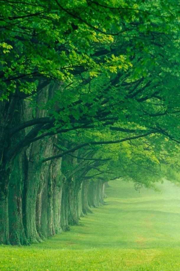 Nature backgrounds hd High Resolution Nature Wallpapers 40 Nature Wallpapers 41 Nature Wallpapers 42 Wonderful Engineering 50 Nature Wallpapers Hd For Free Download
