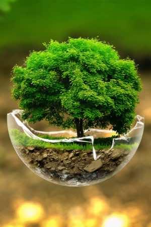 HD Hot Wallpaper tree in glass