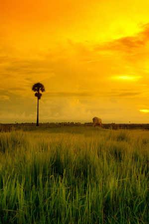 HD Hot Wallpaper grassland