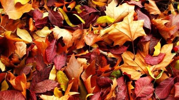 Autumn wallpaper 1