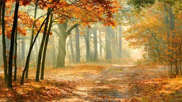 Autumn wallpaper 19