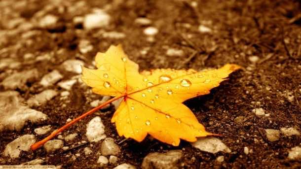 Autumn wallpaper 20