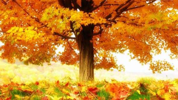 Autumn wallpaper 22