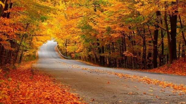 Autumn wallpaper 28