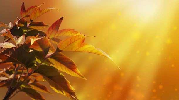 Autumn wallpaper 29