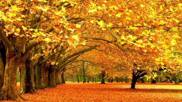 Autumn wallpaper 33