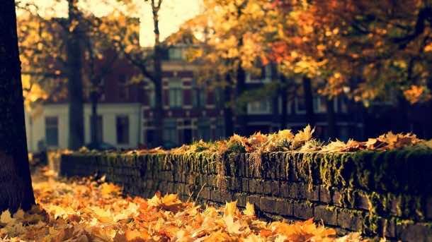 Autumn wallpaper 36