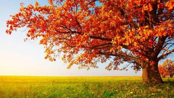 Autumn wallpaper 38