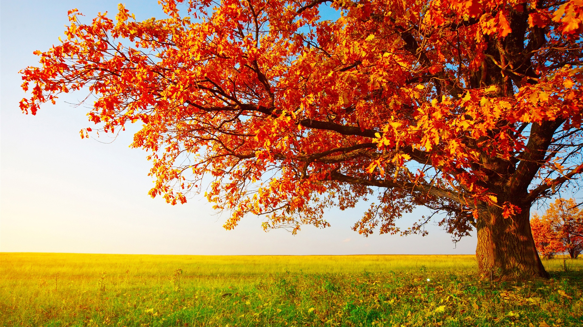 40 Autumn Wallpaper Backgrounds For