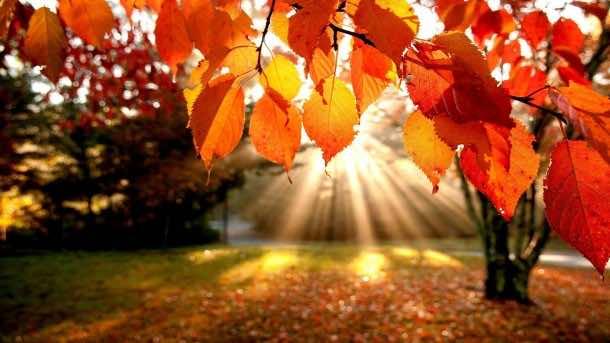 Autumn wallpaper 5