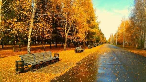 Autumn wallpaper 8