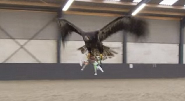 Dutch Police Will Use Trained Eagles For Taking Down Drones 2