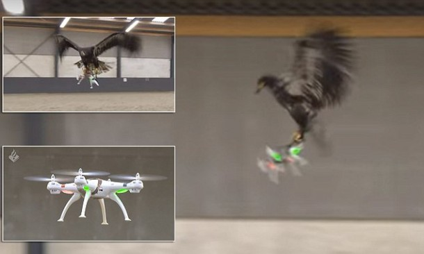 Dutch Police Will Use Trained Eagles For Taking Down Drones 3